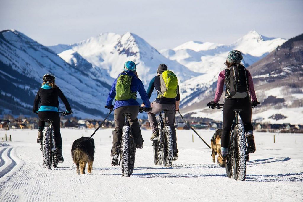 Pack of Cyclists with Pet Dogs