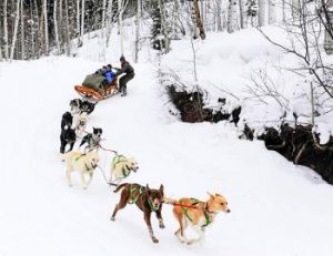 Dogsledding at Krabloonik