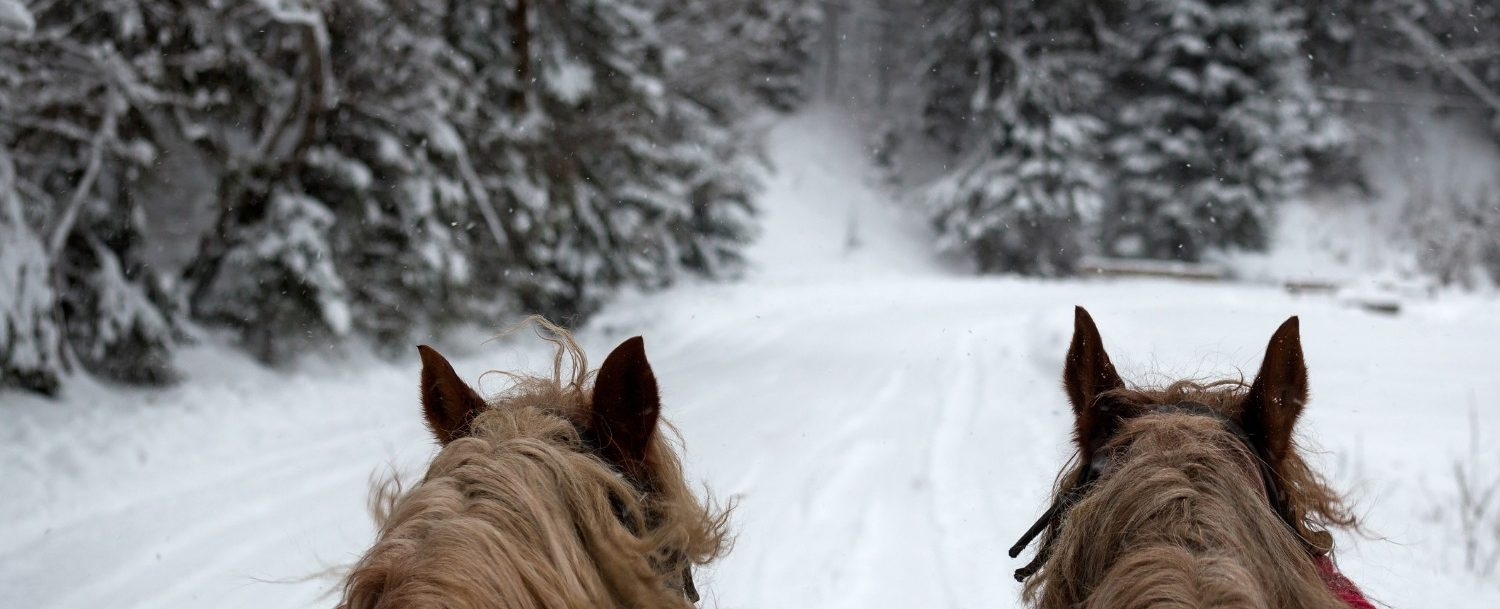 back of horses heads with snow background